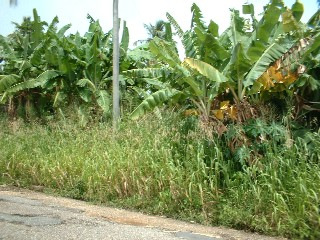 Land For Sale Mayaro